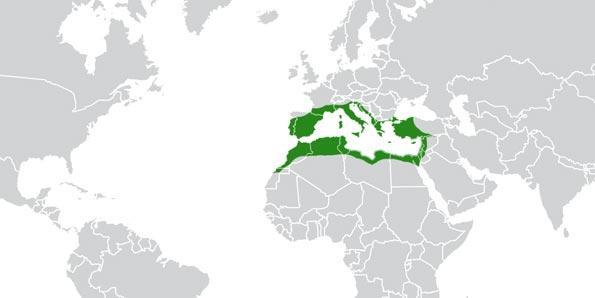 Where cork naturally grows, origin of cork