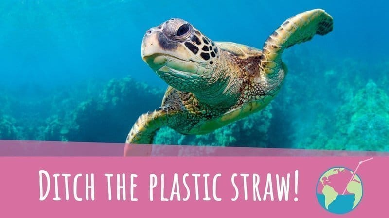 ocean plastic, eco friendly straws, sea turtle