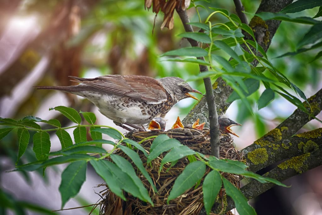 bird nesting in tree