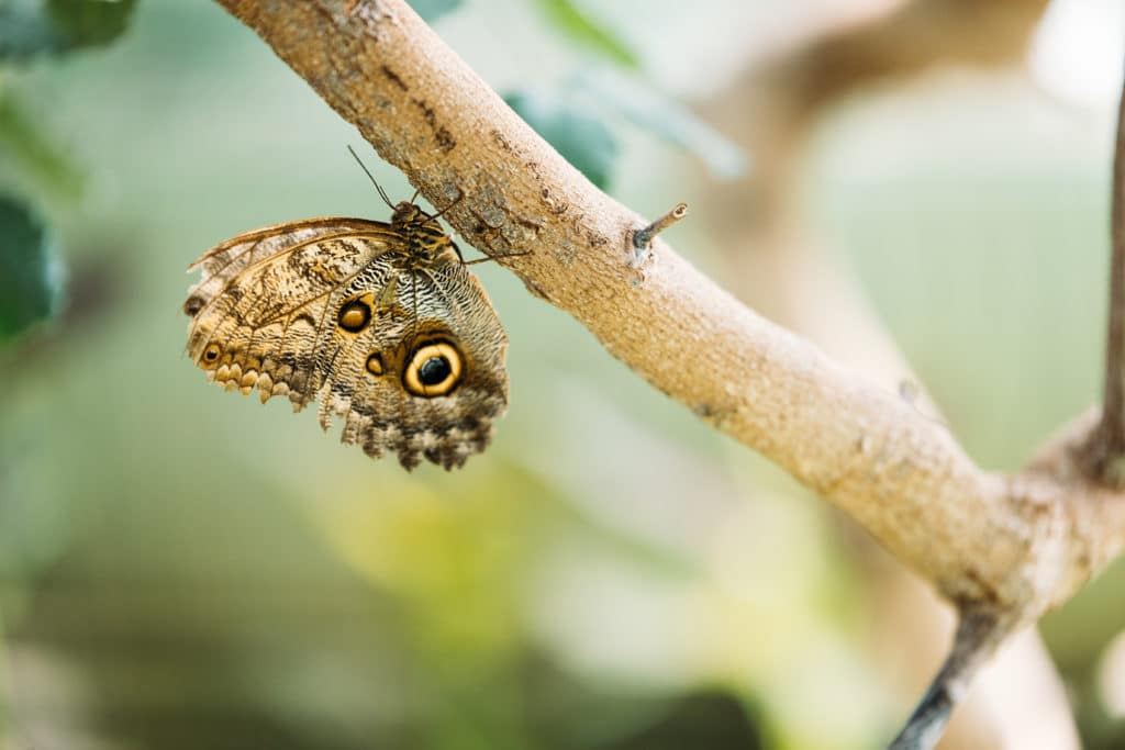 Butterfly attracted by tree farm