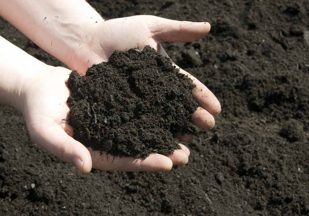Loam Soil Type