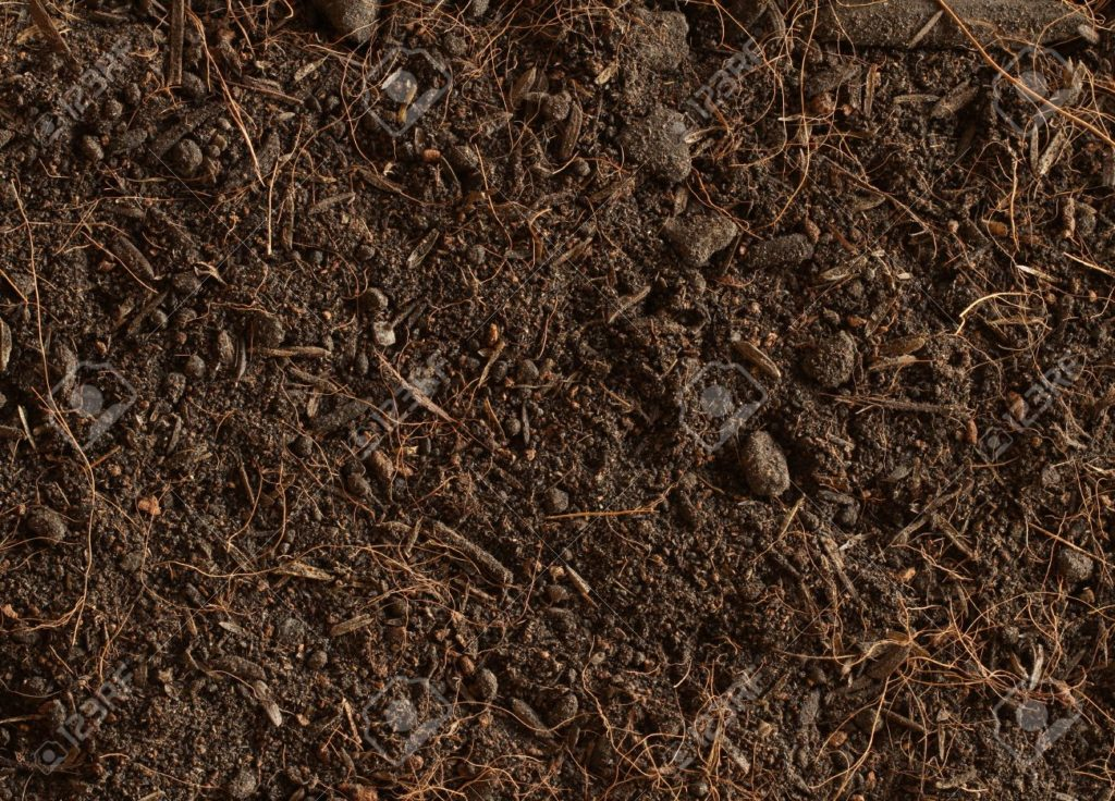 Peat Soil Type