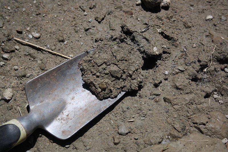 Silt Soil Type