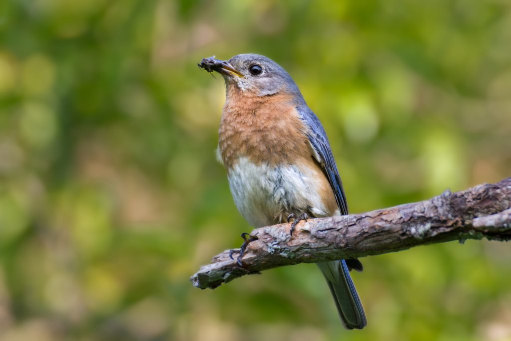 Attract Birds, Eco Friendly Pest Control