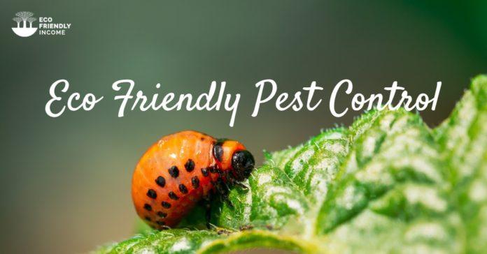 Eco Friendly Pest Control Methods (1)