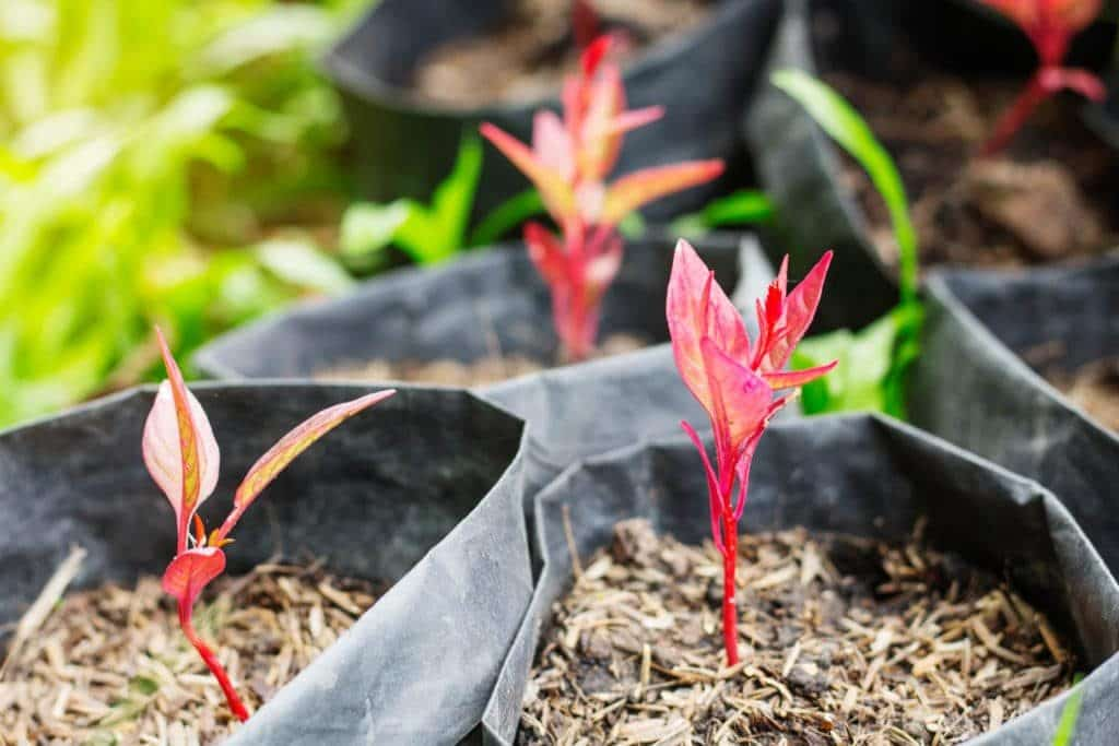 hybrid Tree farming guide
