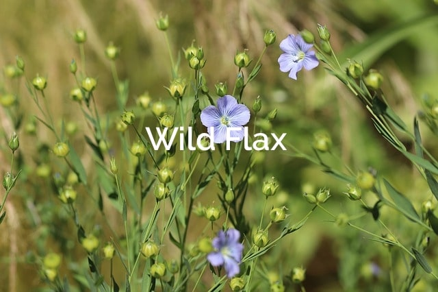 Wild Flax Forest Product