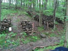 Forest-Farming-Mushrooms-Logs
