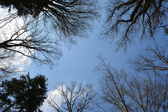 Forest Tree Canopy Bare