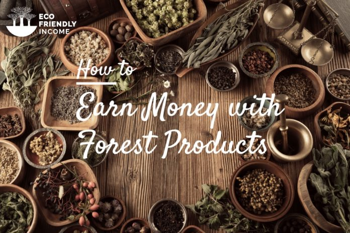 How to earn money with forest products