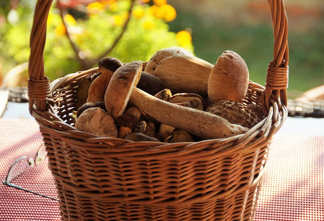 Harvesting Wild Mushrooms Forest Product