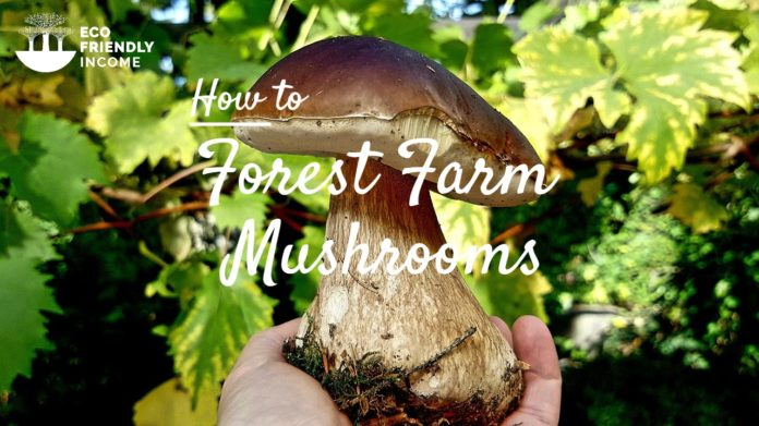 How to Forest Farm Mushrooms For Income