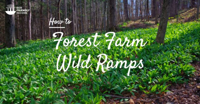 How to Forest Farm Wild Ramps for Income