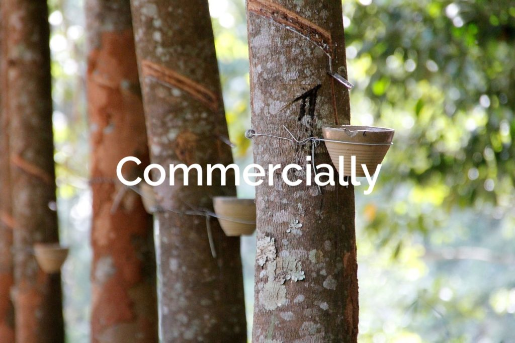 Tree Resin Commercial Extraction