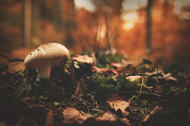 Harvesting Wild Mushrooms