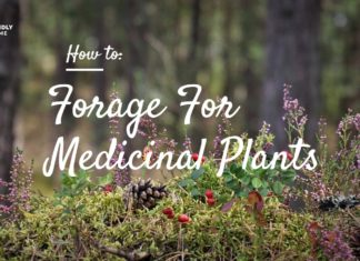 How to Forage For Medicinal Plants