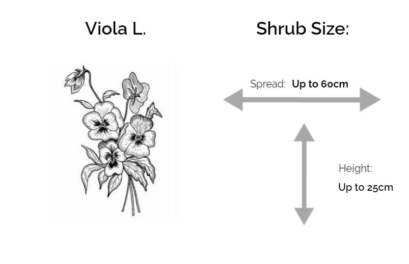 Viola L. information chart drawing