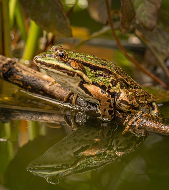 Boreal-Forest-Amphibian-Frog