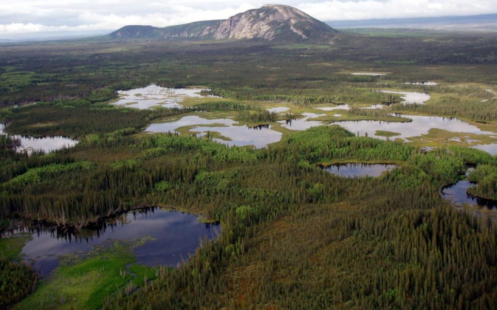 Boreal-Forest-Wetlands