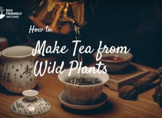 How To Make Tea From Wild Plants