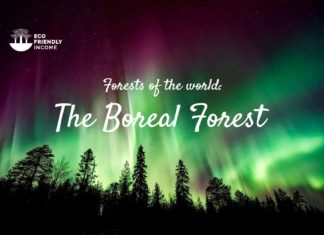 What are the Boreal Forest And Where Can we Find them (3)