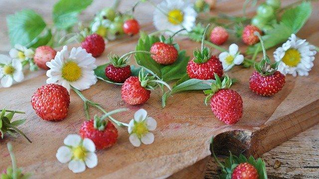 Wild-Tea-Ingredients-Wild-Strawberry