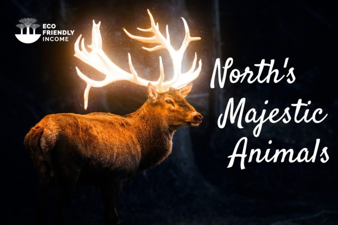 Boreal Forest Animals