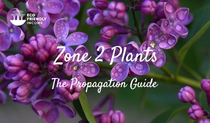 Zone 2 Plants - The Propagation Guide