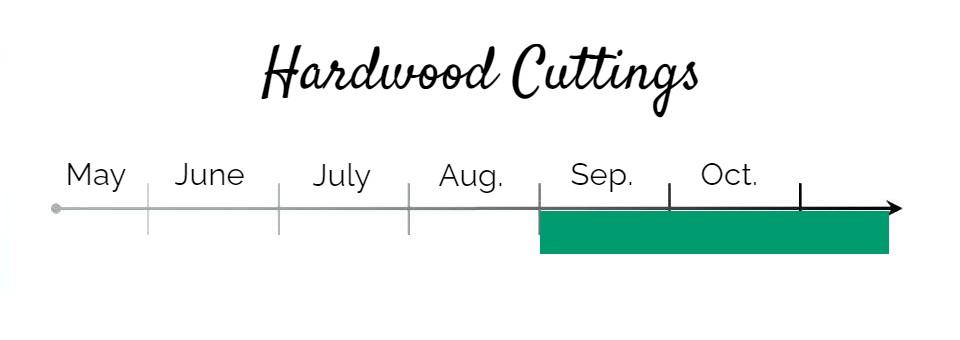 Double-Flowering-Plum-Hardwood-Cuttings