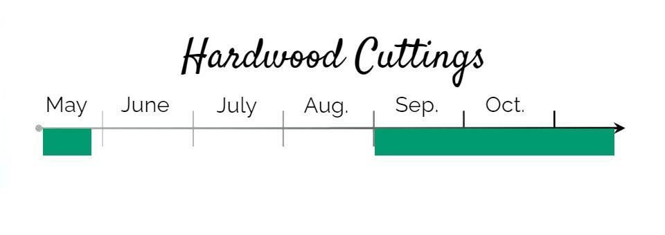 Hardwood Cuttings Period